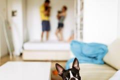 De hond kijkt recht royalty-vrije stock afbeeldingen