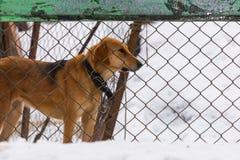 De hond kijkt uit van achter de omheining stock afbeeldingen
