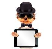De hond kleedde zich als maffiagangster met tabletpc Stock Foto's