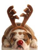 De hond kleedde zich als Rudolph Stock Afbeeldingen