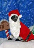 De hond kleedde zich als santa Stock Afbeelding