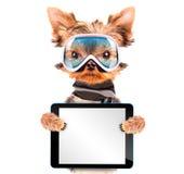 De hond kleedde zich als skiër met tabletpc Stock Afbeeldingen