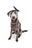 De hond kleedde zich als Vinmeisje royalty-vrije stock afbeelding