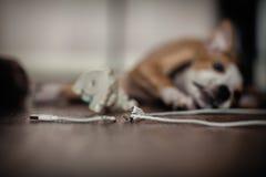 De hond knaagt USB-aan draad royalty-vrije stock afbeeldingen