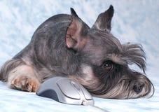 De hond legt Royalty-vrije Stock Foto