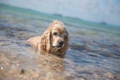 De hond legt in het Overzees stock afbeelding