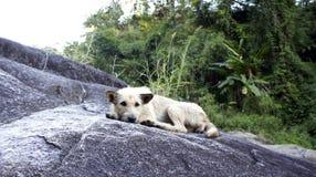 De hond legt op de rotsheuvel Stock Afbeelding