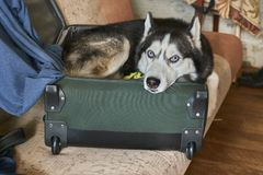 De hond ligt in royalty-vrije stock fotografie