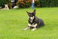 De hond ligt Royalty-vrije Stock Fotografie