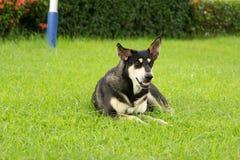 De hond ligt Royalty-vrije Stock Foto