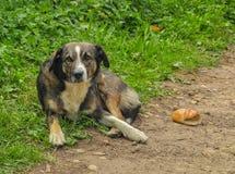De hond ligt op een landelijke weg Droevig kijk Royalty-vrije Stock Foto's