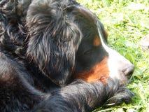 De hond ligt op de rivierbank in hete suuny dag Stock Afbeeldingen