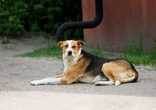 De hond ligt op de weg Stock Afbeeldingen