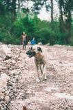 De hond loopt met de eigenaar in het park stock foto's