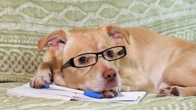 De hond met glazen Het concept van het onderwijs stock video
