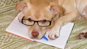 De hond met glazen Het concept van het onderwijs stock footage