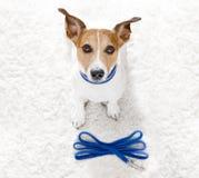 De hond met leiband wacht op een gang royalty-vrije stock afbeelding