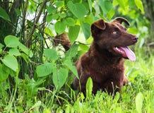 De hond is mijn vriend Stock Afbeelding