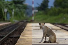 De hond naast spoorweg royalty-vrije stock foto