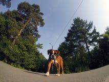 De hond onderzoekt de camera Stock Foto's