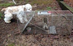 De hond ontmoet eekhoorn Royalty-vrije Stock Fotografie