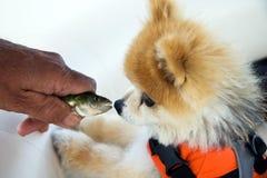De hond ontmoet Vissen Royalty-vrije Stock Foto