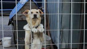 De hond ontschorst achter een omheining stock videobeelden
