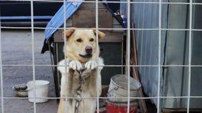 De hond ontschorst achter een omheining stock video