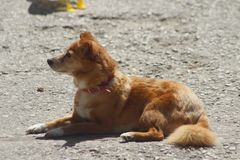 De hond ontspant Royalty-vrije Stock Foto's