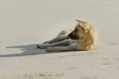 De hond ontspant Stock Afbeeldingen