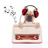 De hond ontspant muziek stock foto