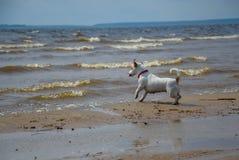 De hond op de rivier Stock Foto's