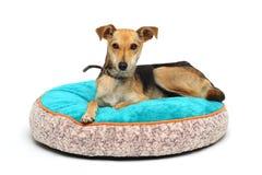 De hond op de deken Royalty-vrije Stock Foto's
