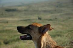 De hond is op het gebied Aanbiddelijk puppy Een mannelijke hond in het park Stock Fotografie