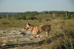 De hond is op het gebied Aanbiddelijk puppy Een mannelijke hond in het park Stock Afbeeldingen