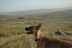 De hond is op het gebied Aanbiddelijk puppy Een mannelijke hond in het park Royalty-vrije Stock Fotografie