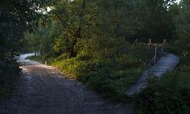De hond is op de weg in het park royalty-vrije stock afbeeldingen