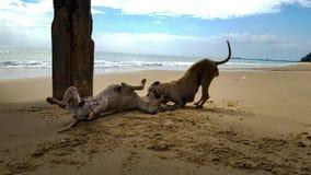 De hond plaagt Stock Afbeelding