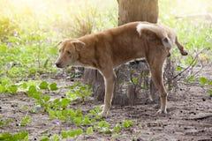 De hond plast onder de boom royalty-vrije stock afbeeldingen