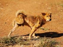 De hond plast rond aan tekengrondgebied Royalty-vrije Stock Afbeeldingen