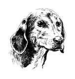 De hond` s hoofd van de handschets Royalty-vrije Stock Afbeeldingen