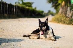 De hond is slaperig royalty-vrije stock foto's