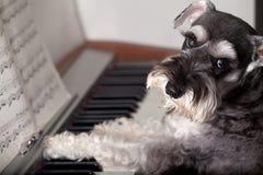De hond speelt de piano? Royalty-vrije Stock Afbeelding