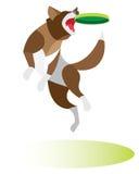 De hond springt om de schijf te vangen Royalty-vrije Stock Afbeeldingen