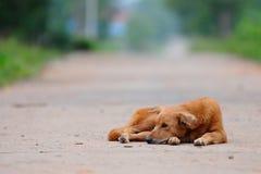 De hond Thai, a-hond zit op de weg Thailand stock foto's