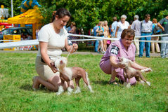 De hond toont Royalty-vrije Stock Fotografie
