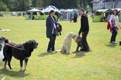 De hond toont Royalty-vrije Stock Foto