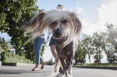 De hond van Ð ¡ Ute Royalty-vrije Stock Foto's