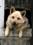 De hond van Bitzer Royalty-vrije Stock Afbeeldingen