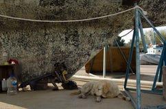 De hond van de bootyard stock fotografie